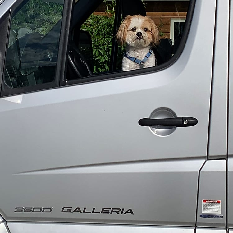 Co-pilot. Dogs welcome on a case-by-case basis. They can only drive if licensed.