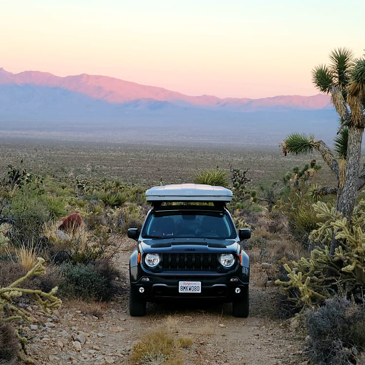 Hanging out in the Mojave National Preserve!