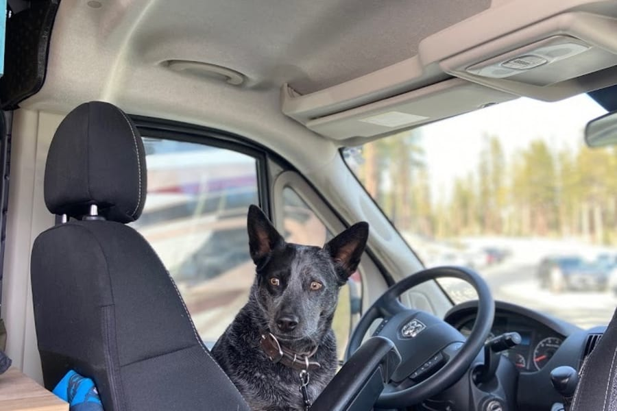 Scout is ready to ride!