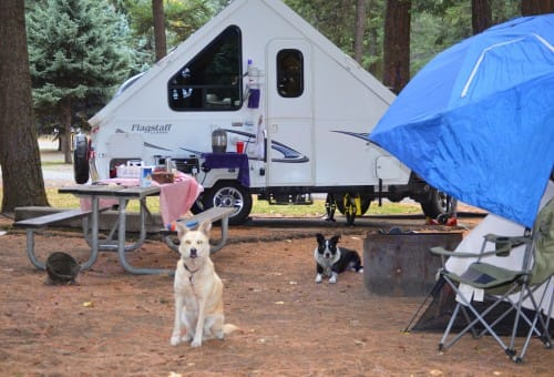 Dogs not included. :->   . Forest River Flagstaff Classic 2013