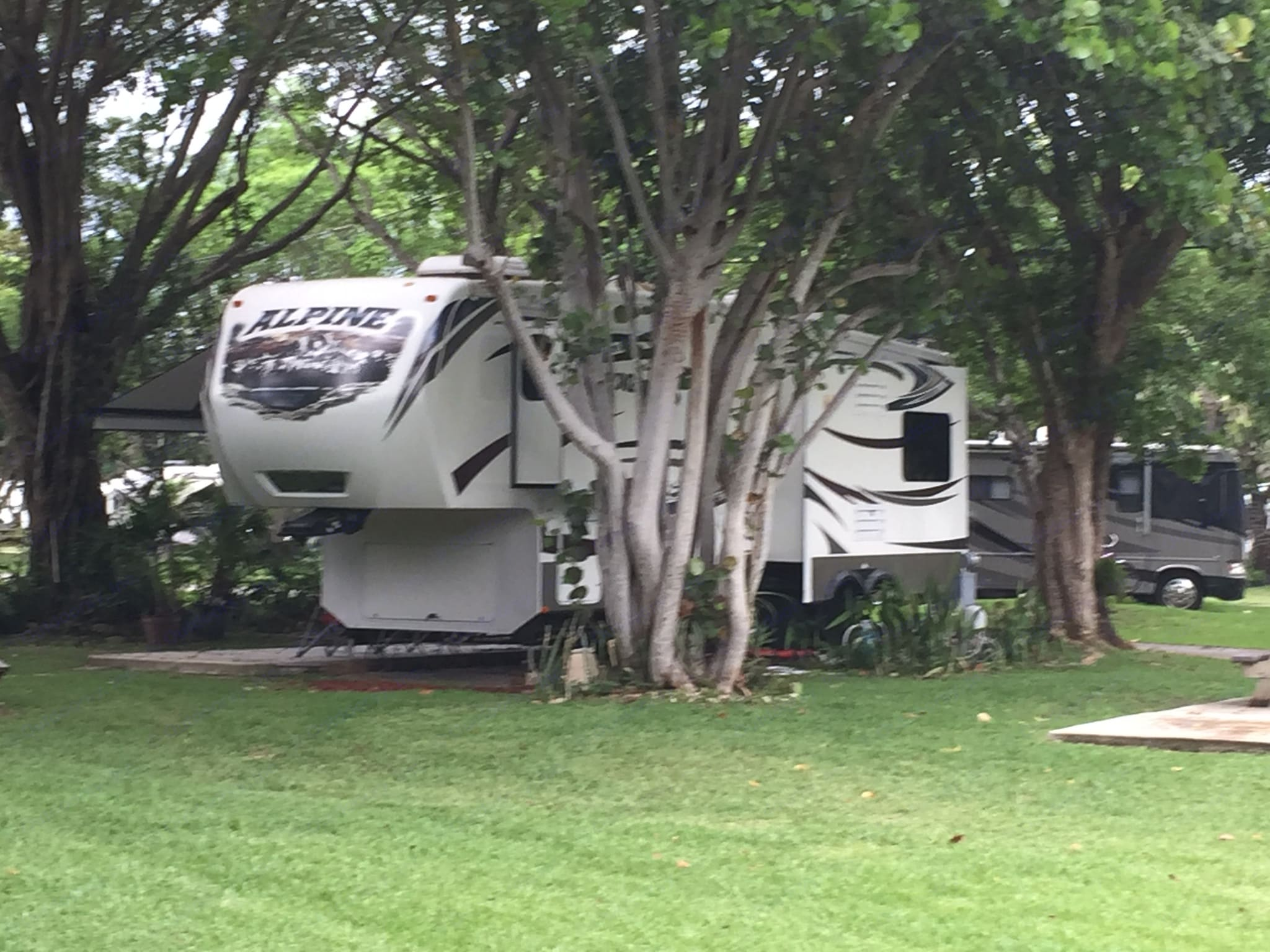 These photos were taken at the Miami Everglades Resort....it's beautiful!  The campground used to be an avocado orchard and most sites enjoy a wonderful canopy of banyans, oaks, mangos and avocados!. Keystone Alpine 2014