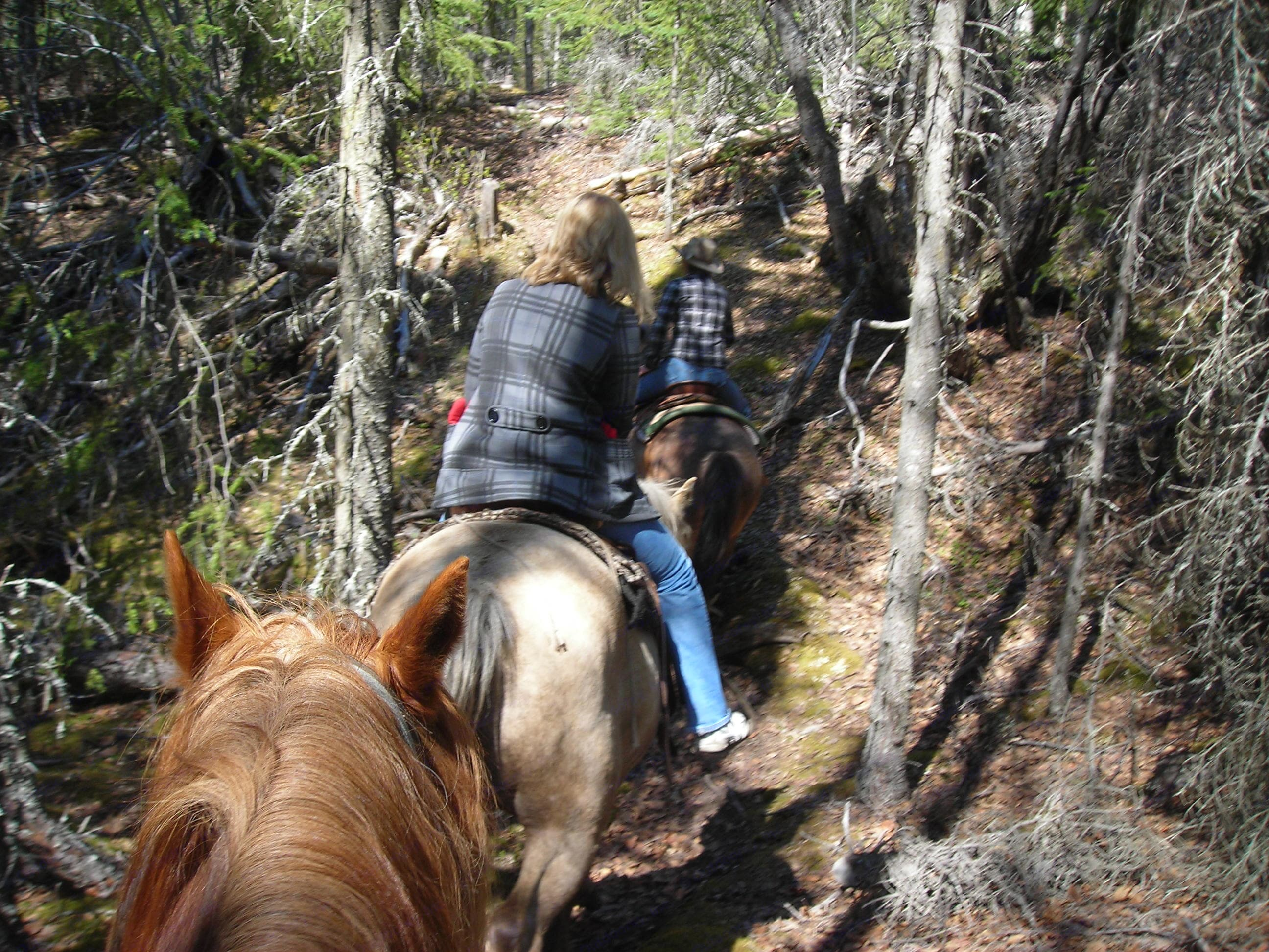 Horse back riding through the country side.. Georgie Boy Cruise Master 35foot 1998