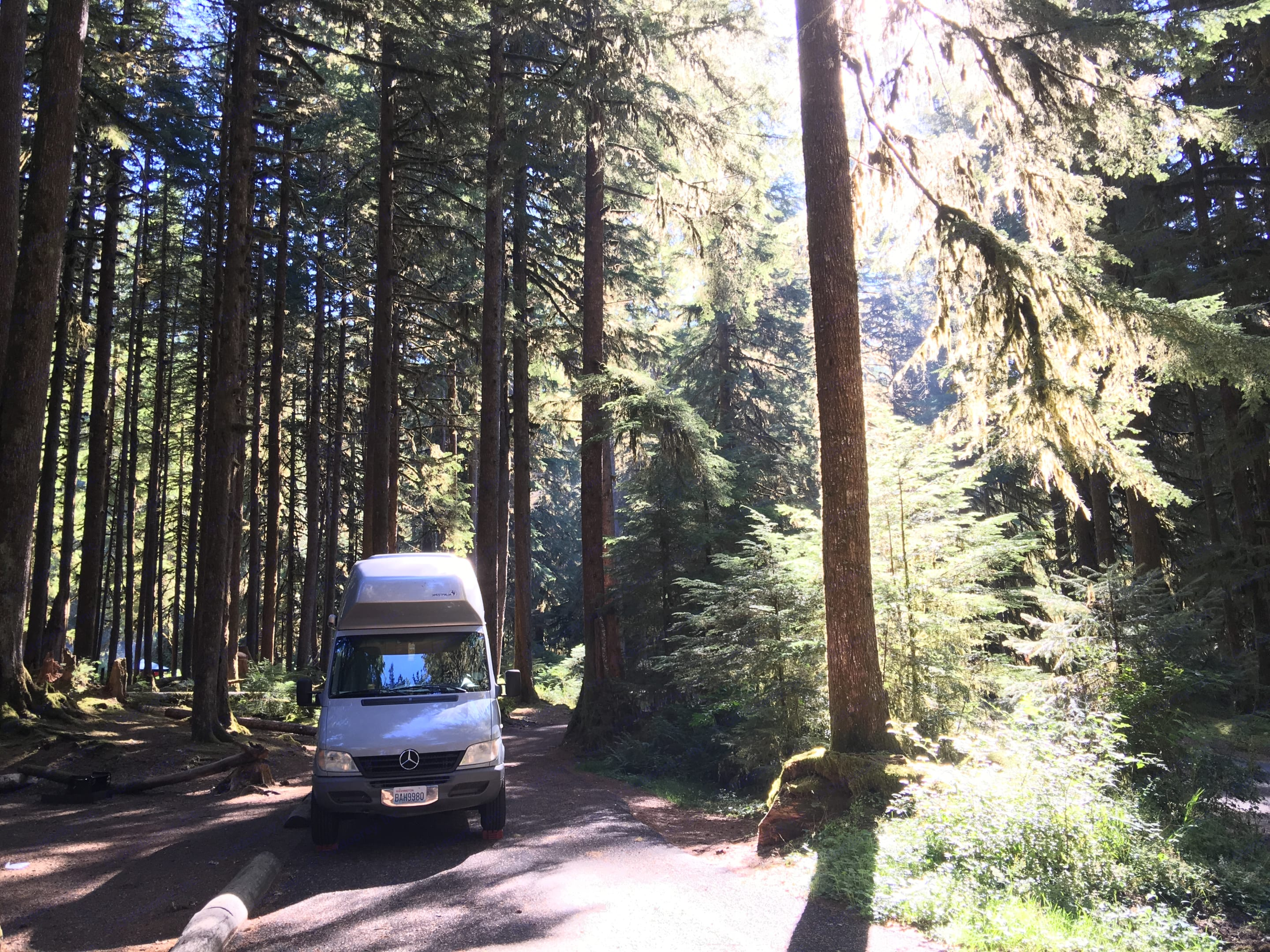 Walter loves the mountains and the rainforest!. Mercedes-Benz Sprinter Westfalia 2005