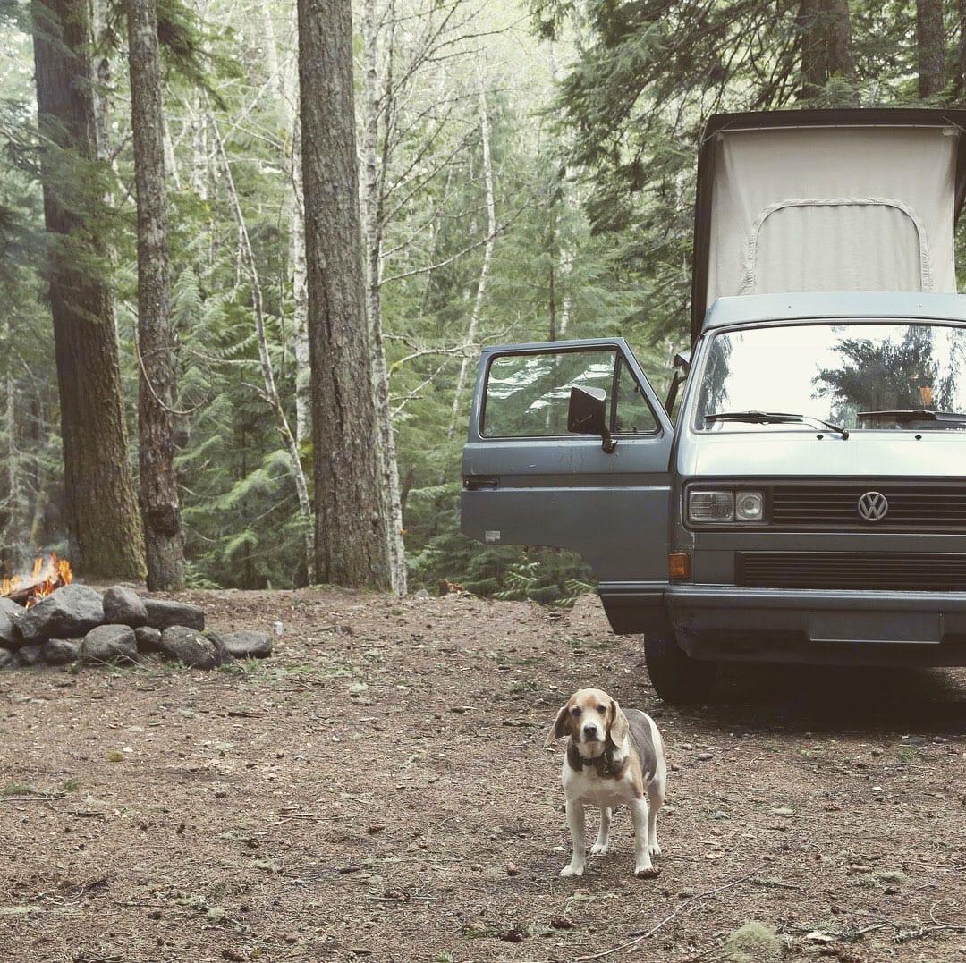 Rufus . Volkswagen Westfalia 1989