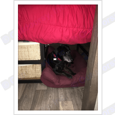 Dog bed plus ample underbed storage. Forest River Vibe 2018