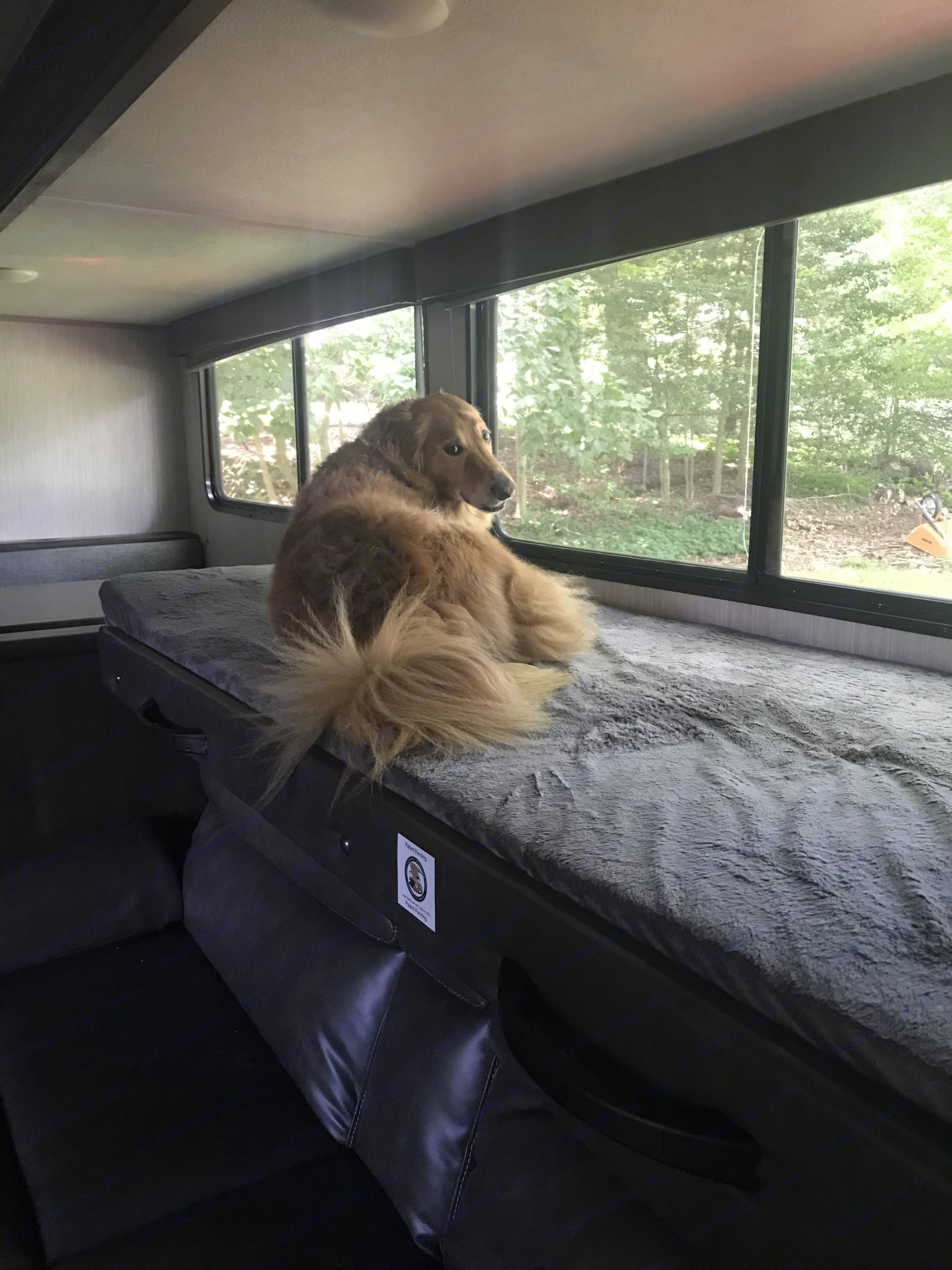 Couch/bunk bed combo. ForestRiver CherokeeWolfPup 2019