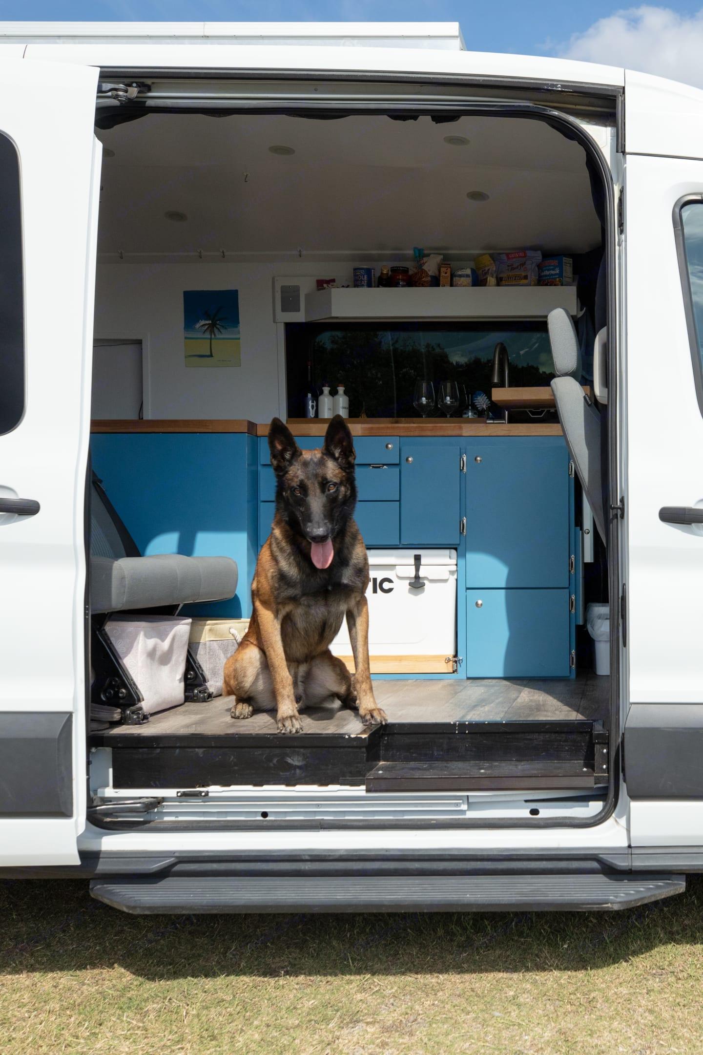 Dog friendly. Ford Custom Transit 2016