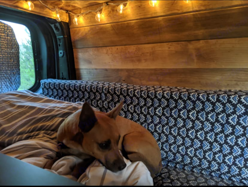 take your pup along. Ford Transit 2015