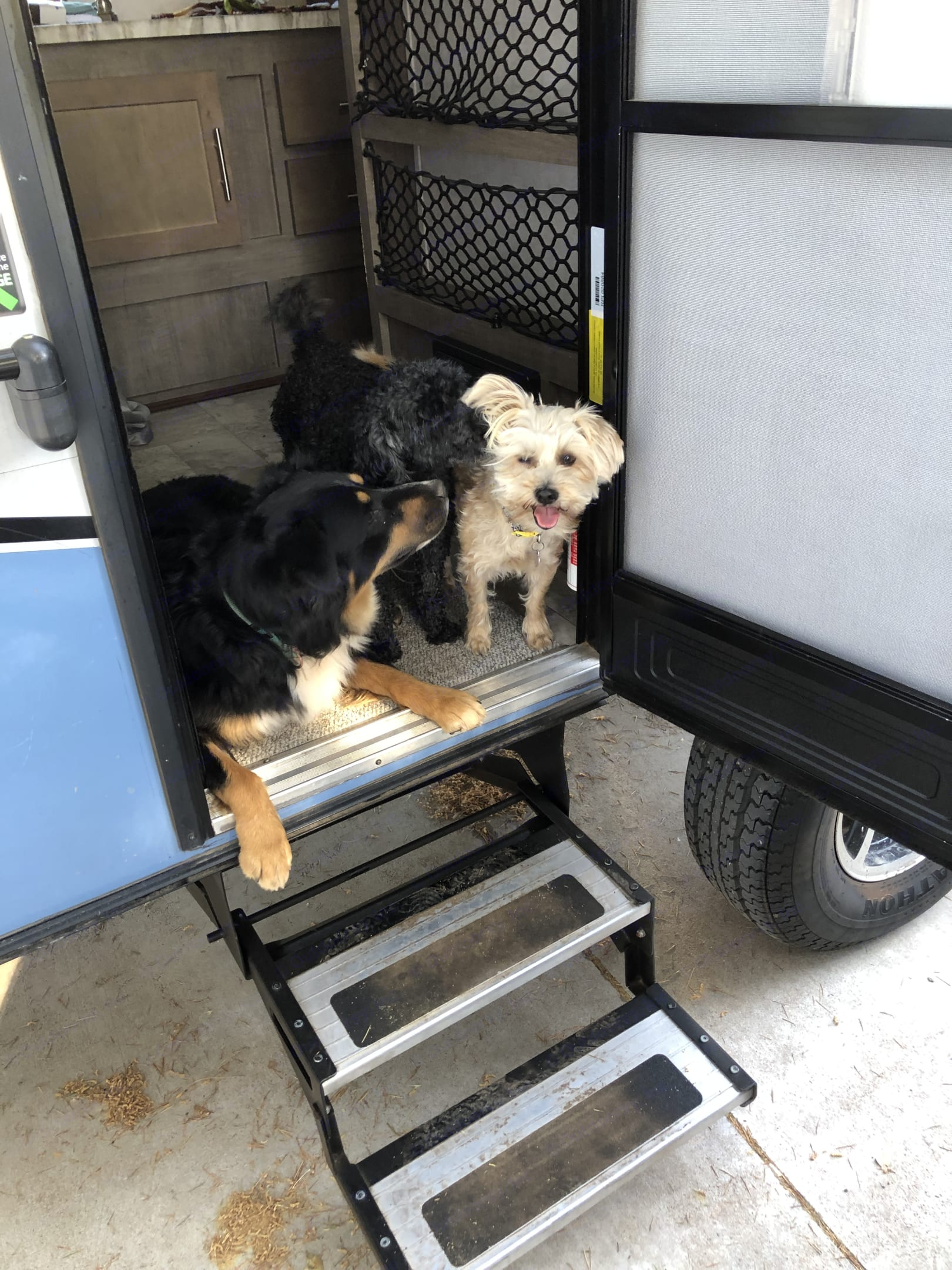 the dogs love the camper!. Forest River R-Pod 2018