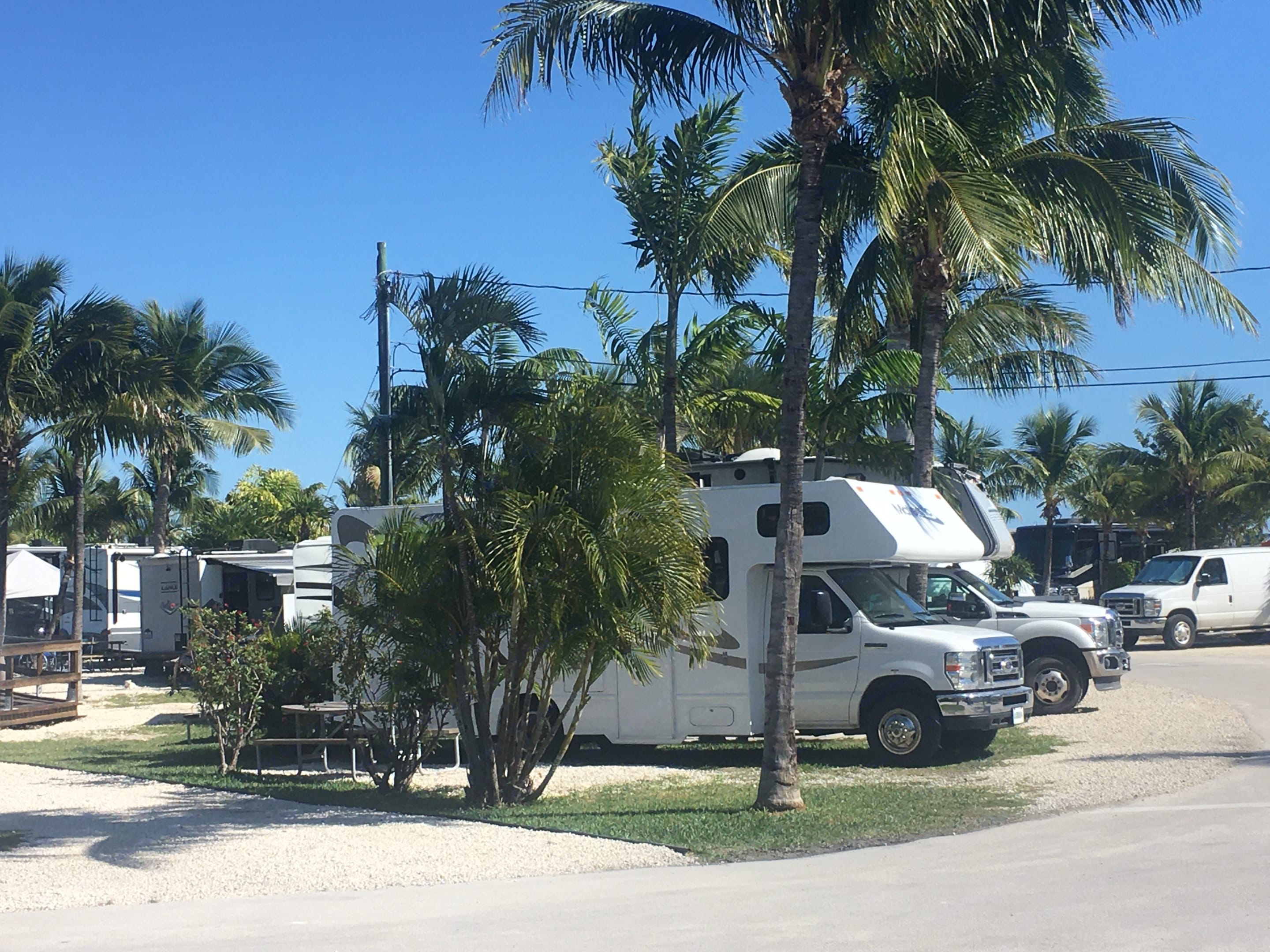 Palm Trees were quite a shock to this New Englander in January.  Living the dream!. Thor Motor Coach Four Winds Majestic 2016