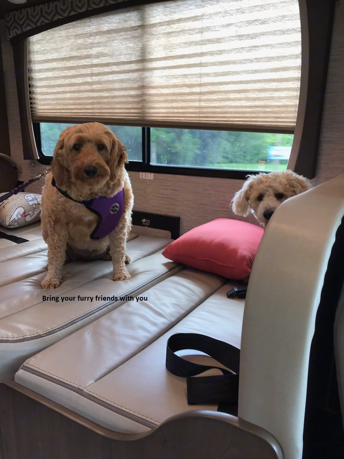 Our furry friends love this view when we travel. Thor Motor Coach Chateau 2021