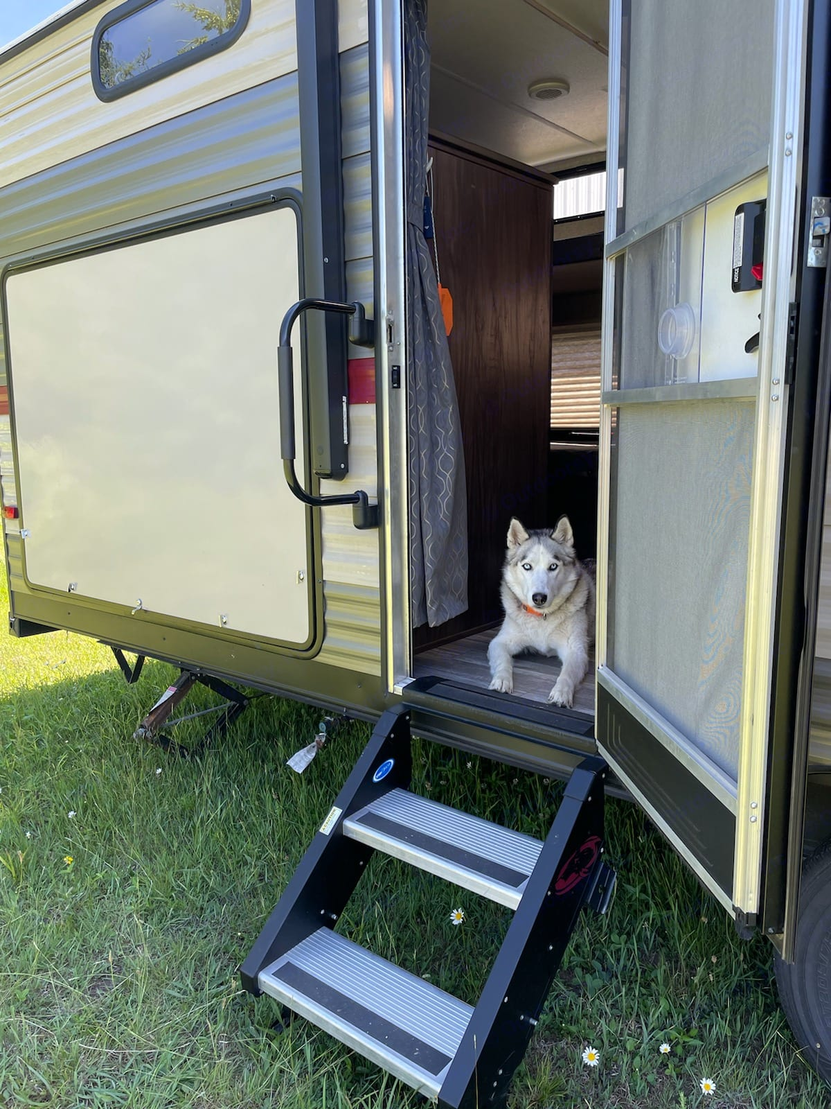 Theo hanging out in The Theodore.. Forest River Cherokee Grey Wolf 2019