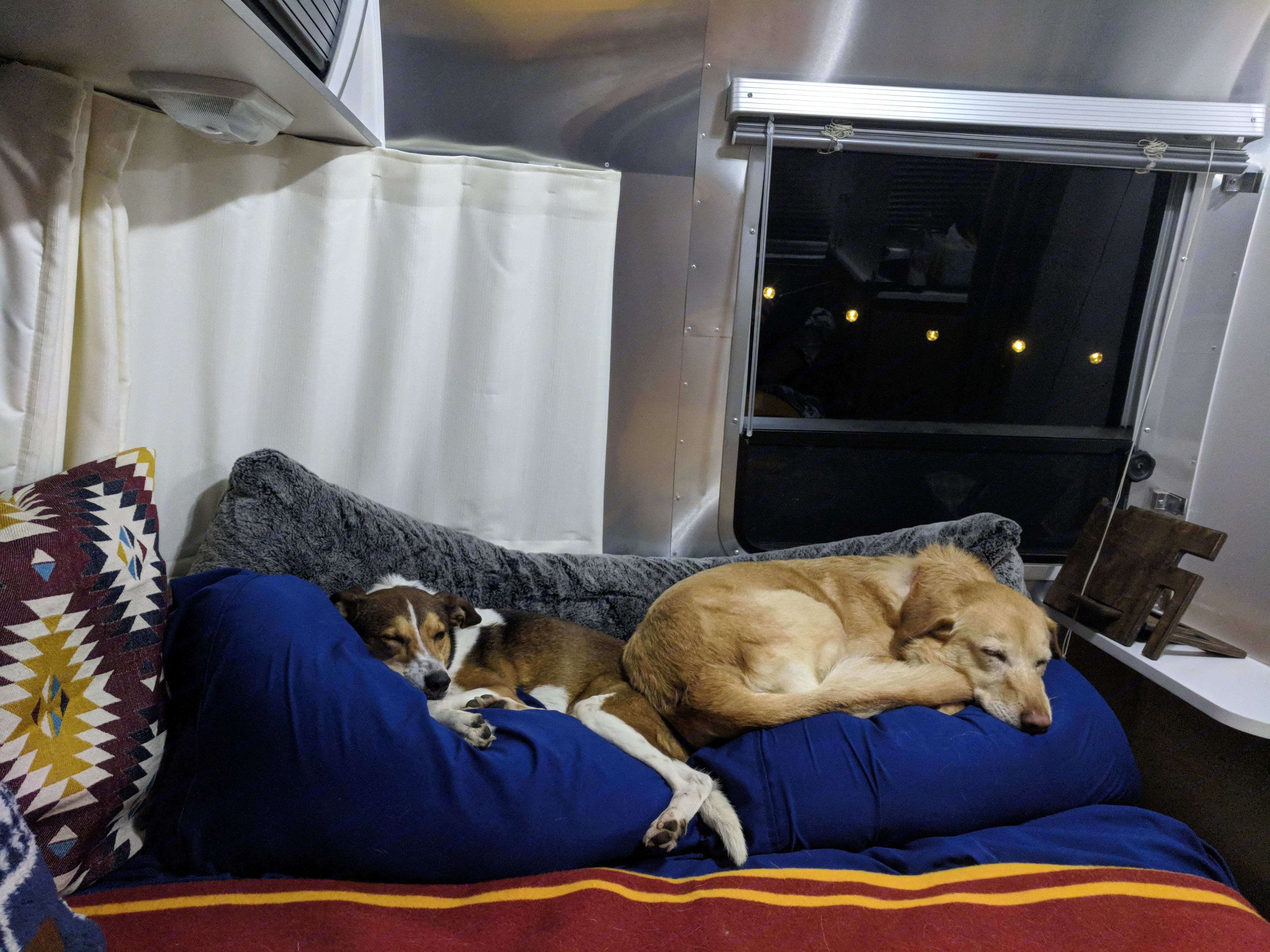 The Airstream is dog friendly. Here are our two pups enjoying the bed after a long day of adventures!. Airstream Sport 2014