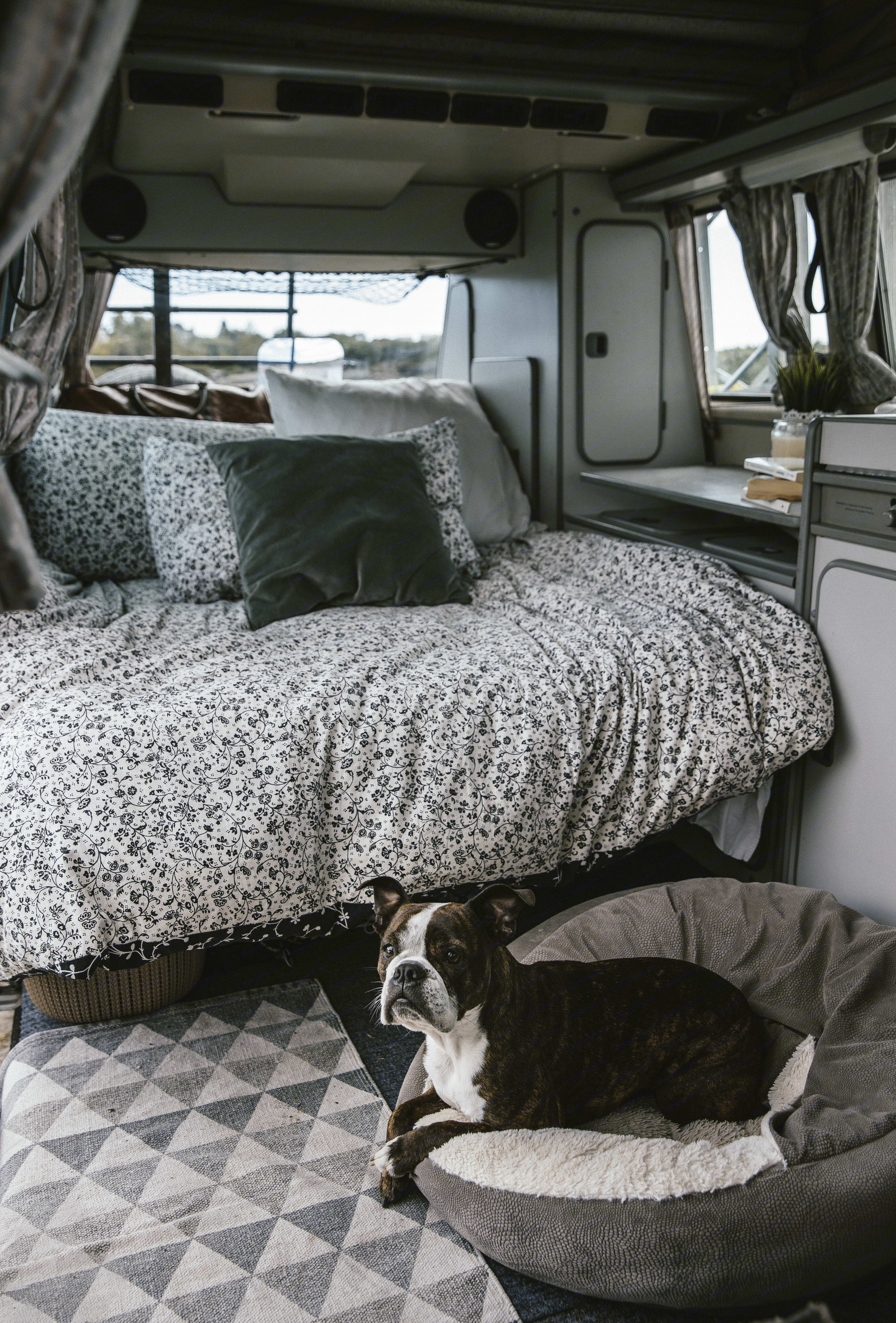 Your dog, are for sure, welcome for a little fee of 40$. I need to clean very deeply to remove all the trace of your badass copilot dog...in case someone are allergic after you. Like this everyone can enjoy there roadtrip ;). Volkswagen T3 Westfalia 1984