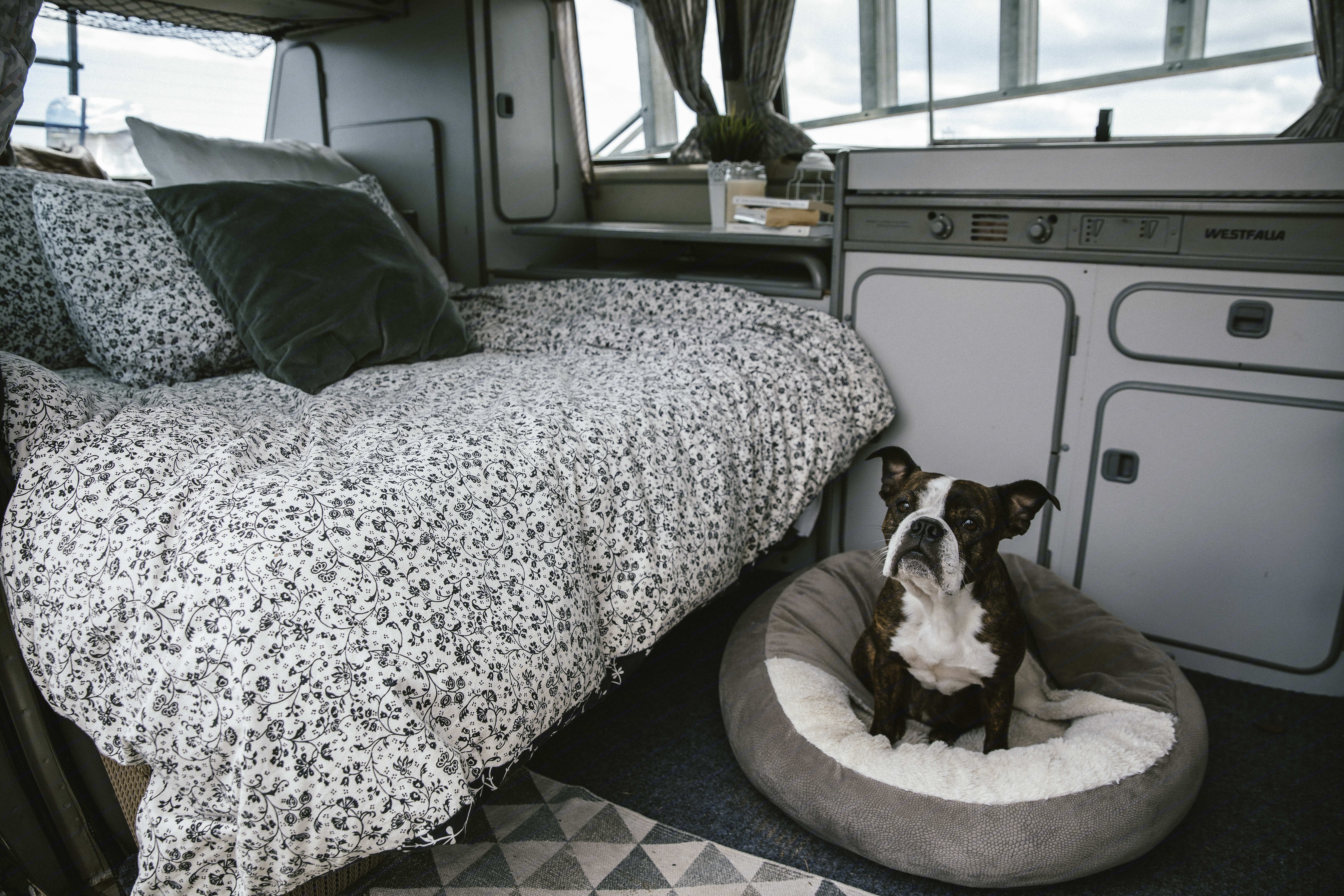 Your dog, are for sure, welcome for a little fee of 40$. I need to clean very deeply to remove all the trace of your badass copilot dog...in case someone are allergic after you. Like this everyone can enjoy there roadtrip ;). Volkswagen T3 Westfalia 1985