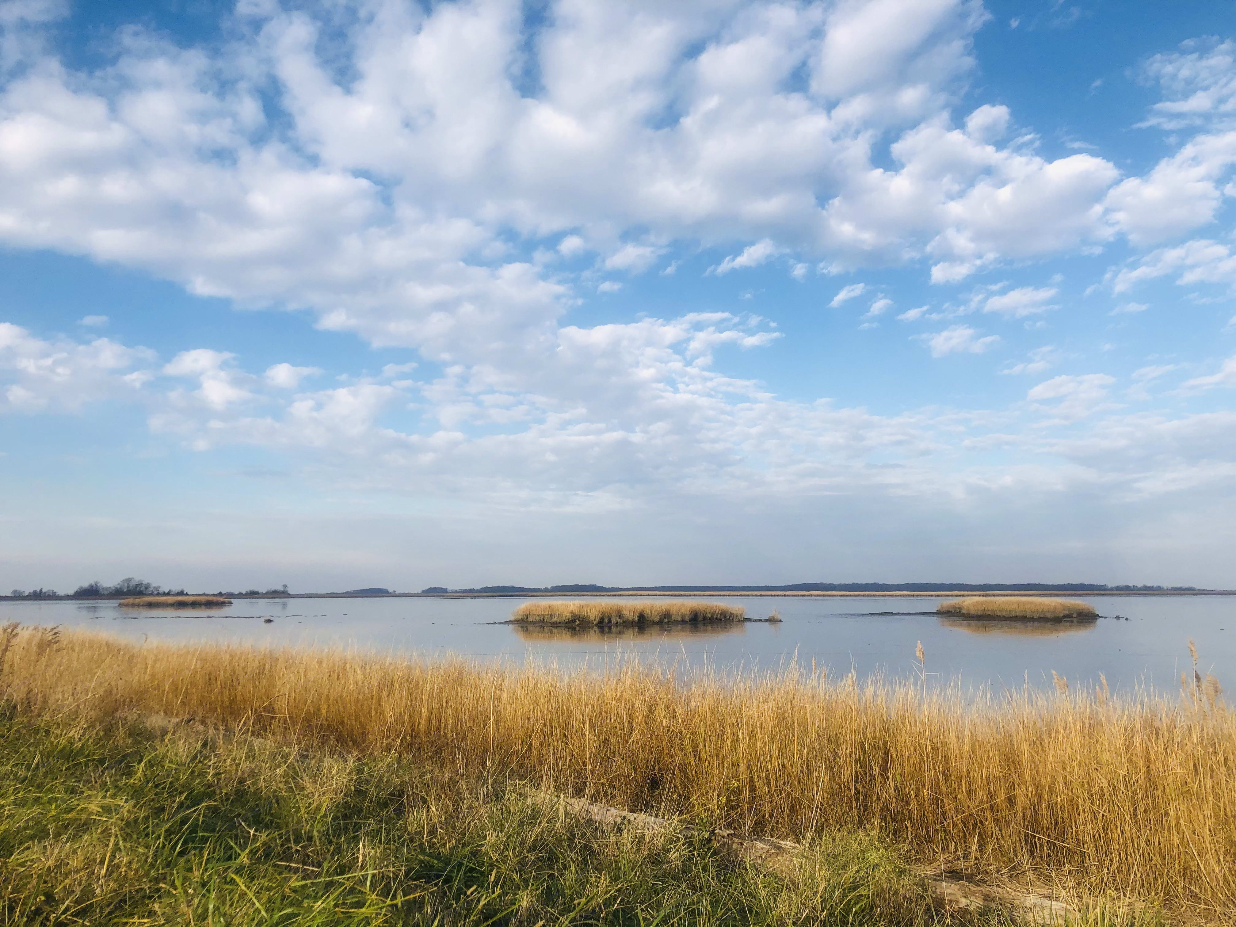 Bombay Hook National Wildlife Refuge. Ford Transit 2019