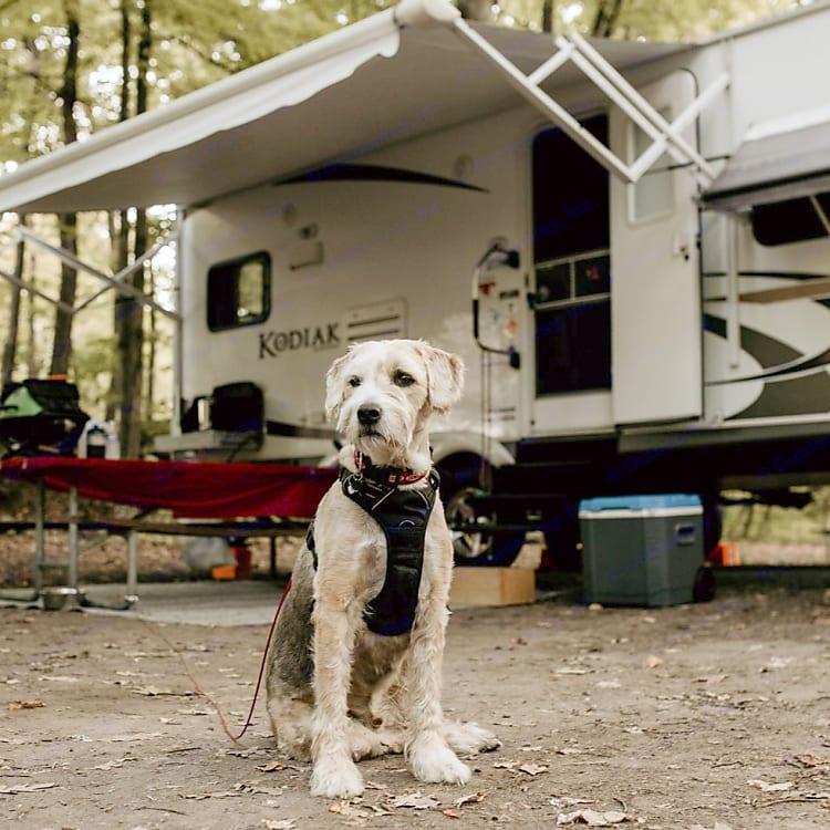 Harvey, he's not for rent.  Wellesley Island State Park, September 2020