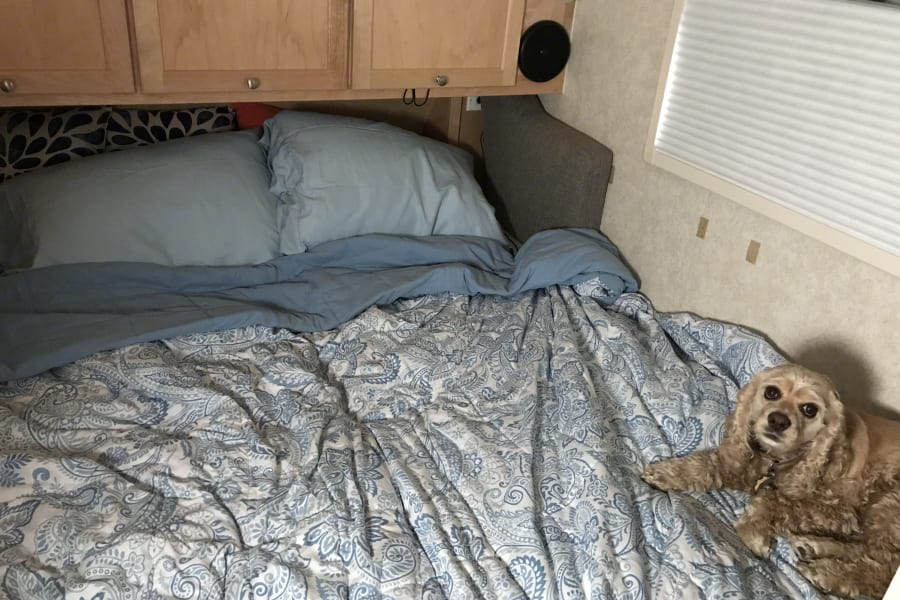 Converted RV queen bed.  Dog not included!