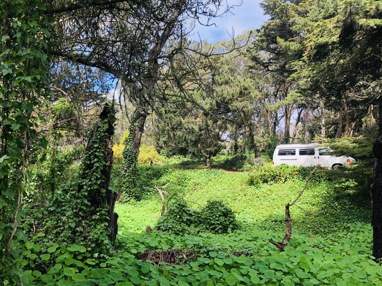 Photo taken in Golden Gate Park.. Volkswagen Eurovan Camper 1997