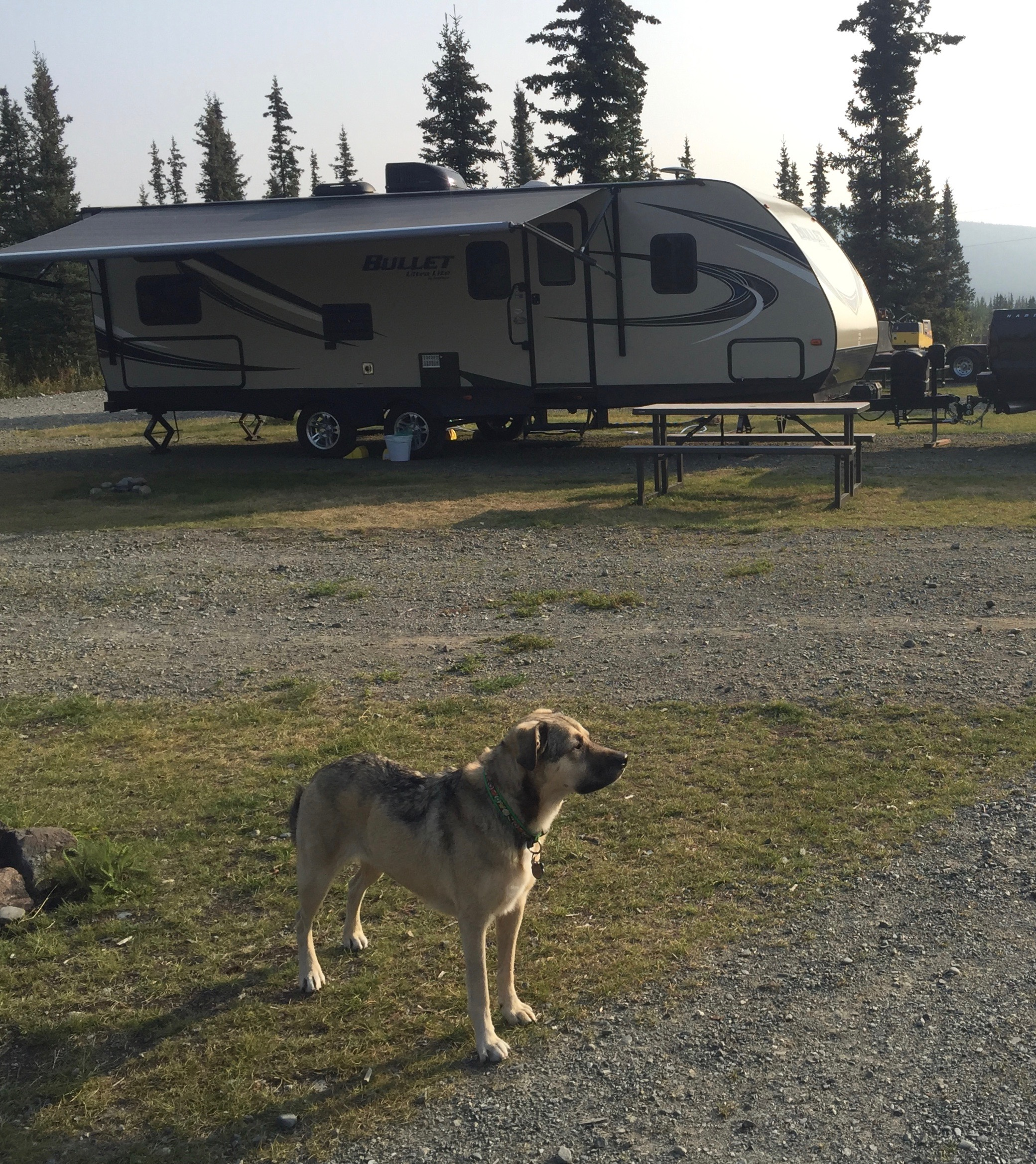 Our dog Roo at the trailer set up.. Keystone Ultra lite Bullet 2017