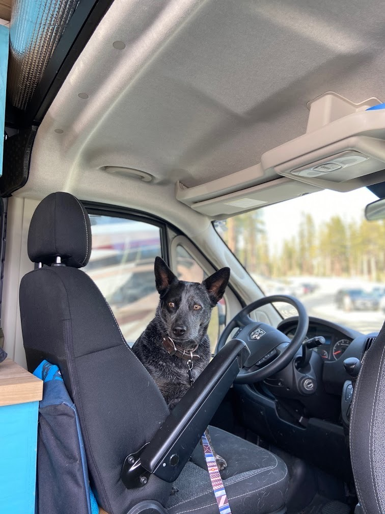 Scout is ready to ride!. Dodge RAM 2500 Promaster 2018