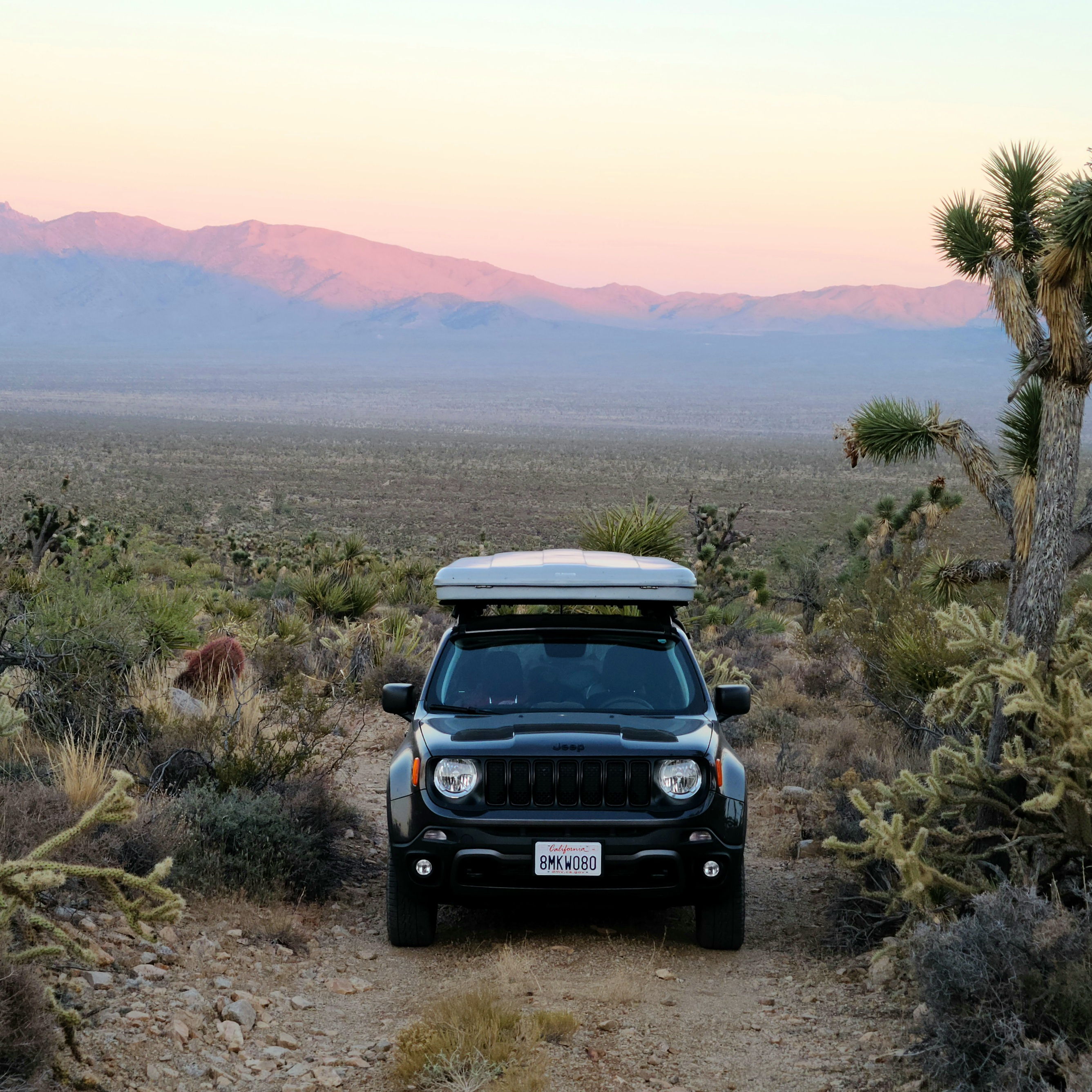 Hanging out in the Mojave National Preserve!. Custom Other 2019