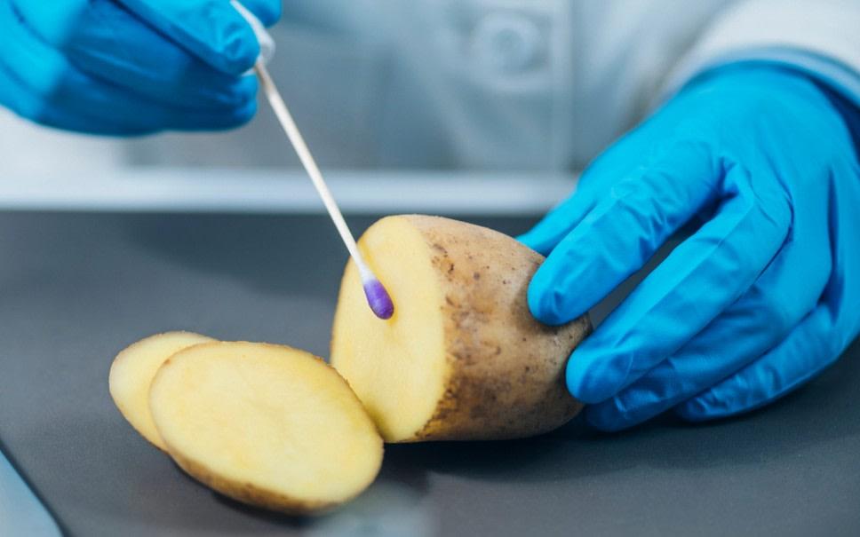 Aardappel onderzoeken shutterstock 1741750787