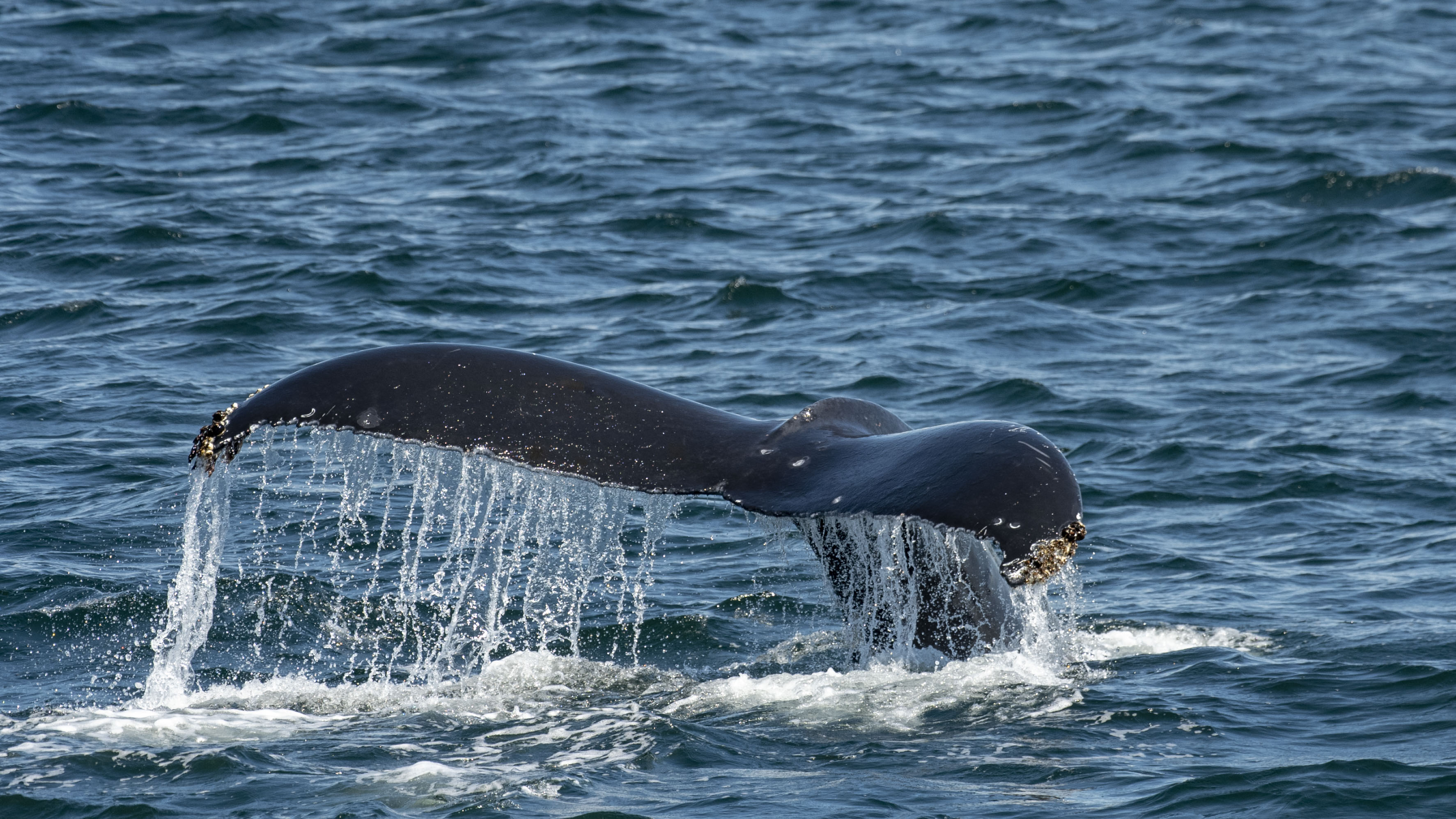 https://res.cloudinary.com/pacific-coastal-cruises-and-tours/image/upload/v1600896189/Wildlife_Whales_fge8lz.jpg