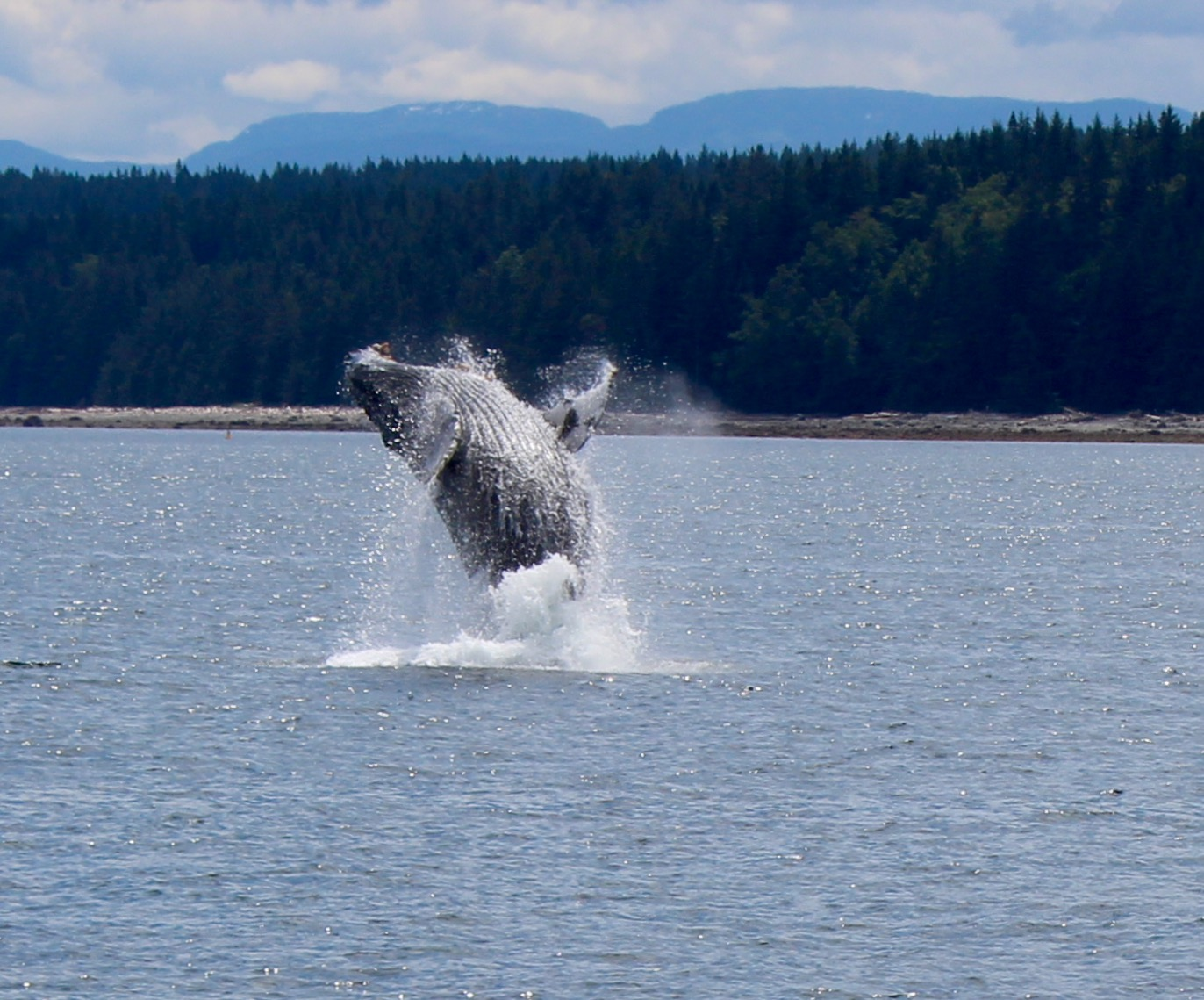 https://res.cloudinary.com/pacific-coastal-cruises-and-tours/image/upload/v1600896190/Wildlife_Whales_2_qvmh9t.jpg