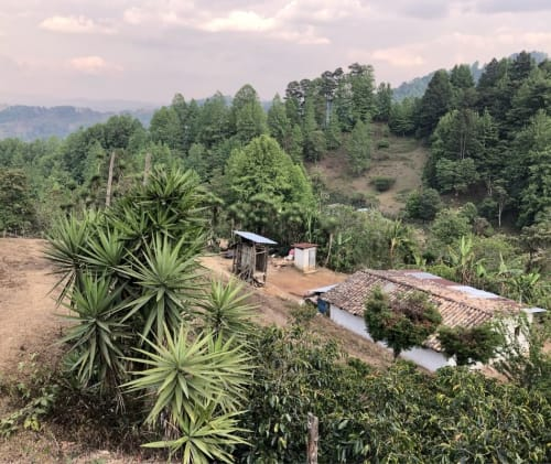 A picture of a coffee farm in Honduras