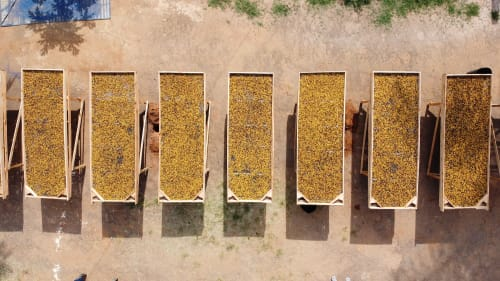 Drying beds on Fazenda Zaroca