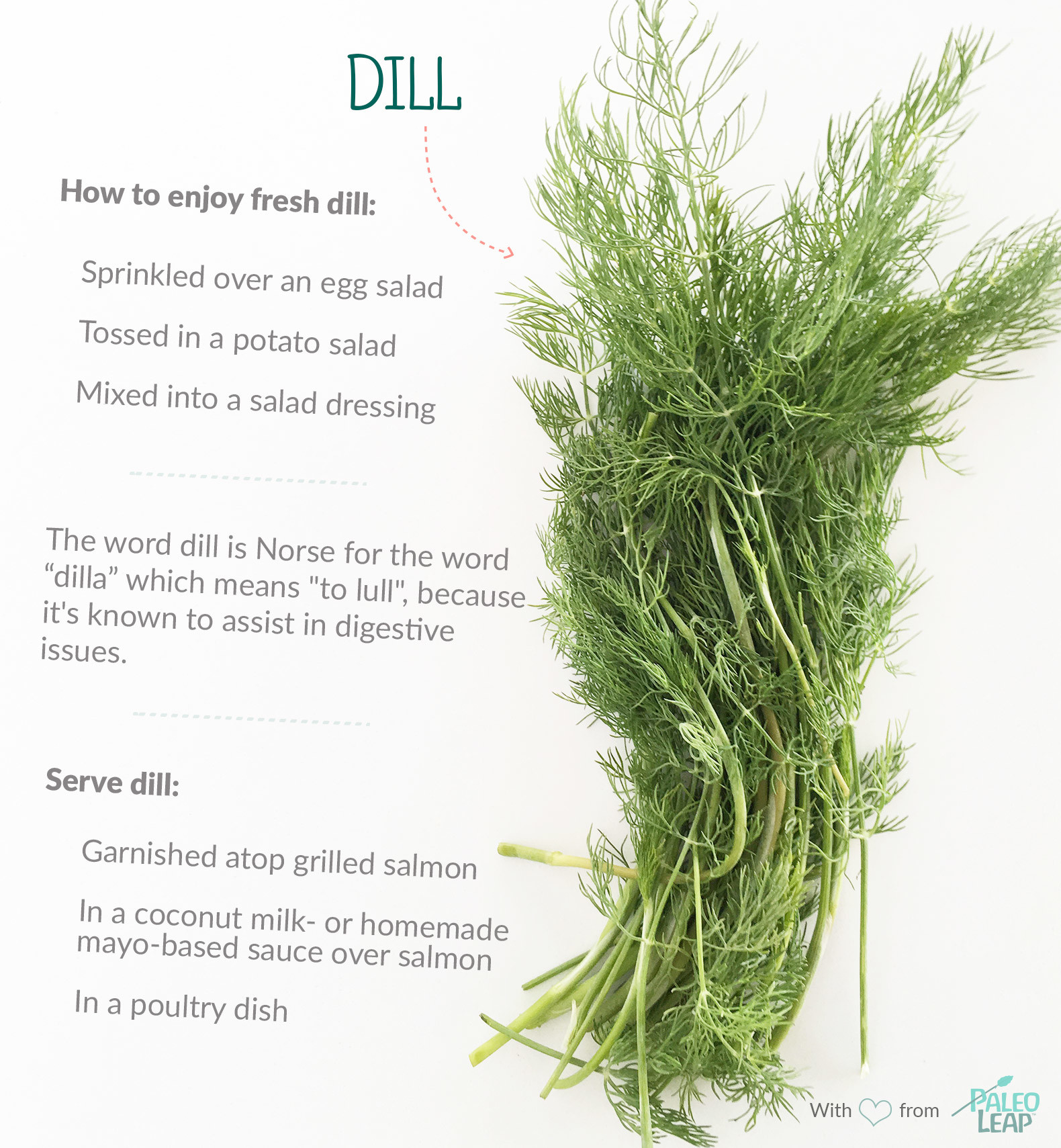 Dill highlights