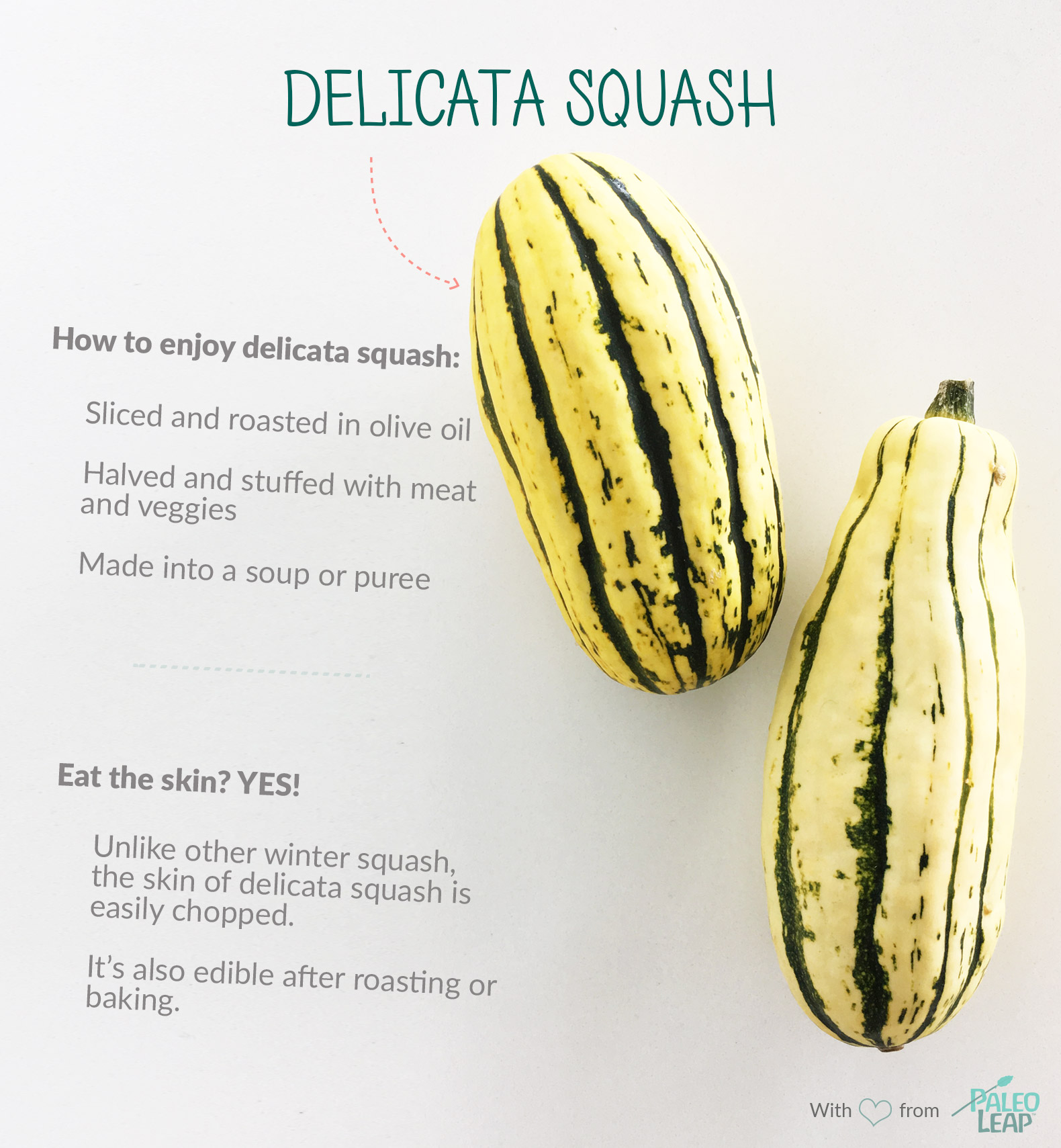 Delicata Squash highlights