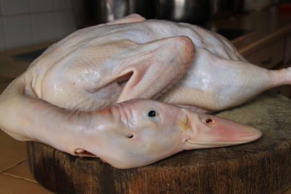 Pilih bebek karkas yang segar