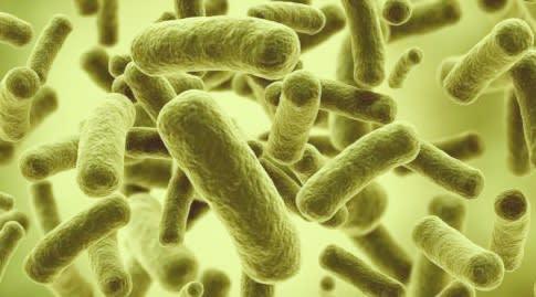 Cara Kerja Probiotik Rabal
