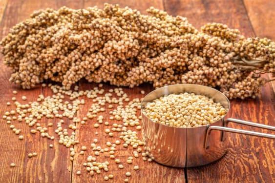 Pakan fermentasi menggunakan Sorgum