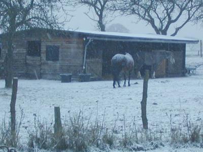 snowhorses.jpg: Horses in the snow