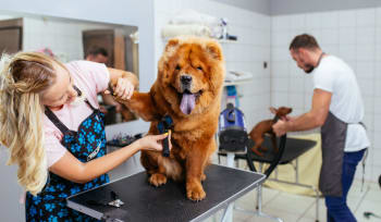 How to find CPD Dog Grooming Courses