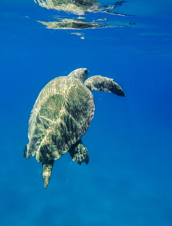 Swimming with turtles off Zakynthos