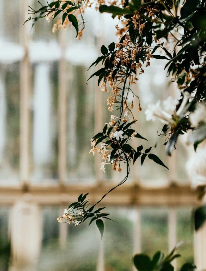 Dublin's National Botanic Gardens