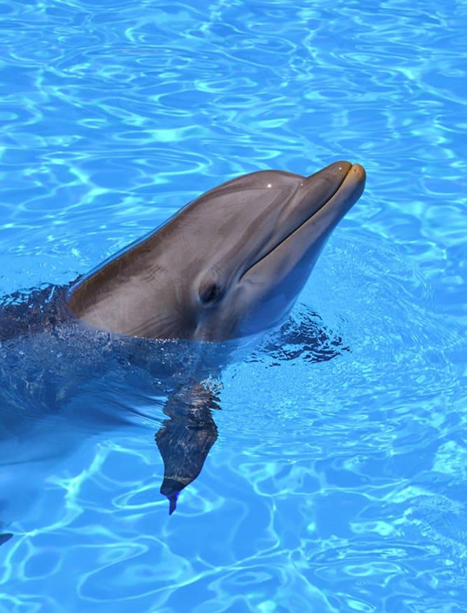 Loro Parque dolphin in Tenerife