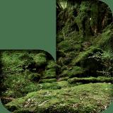 Jungle Studios