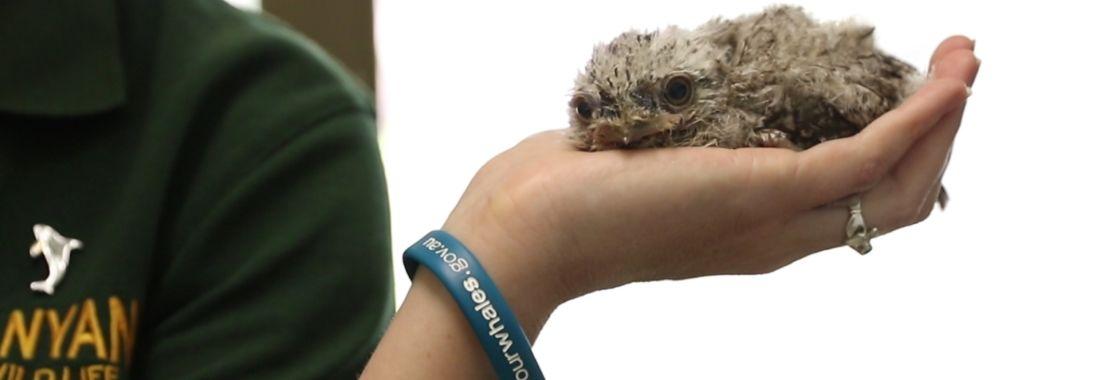 Kanyana wildlife volunteers: Saving our species
