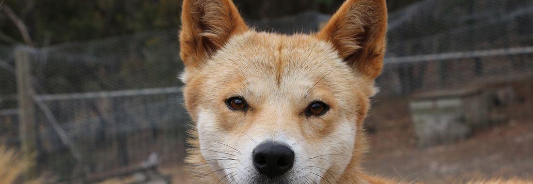 Behind the puppy-dog eyes