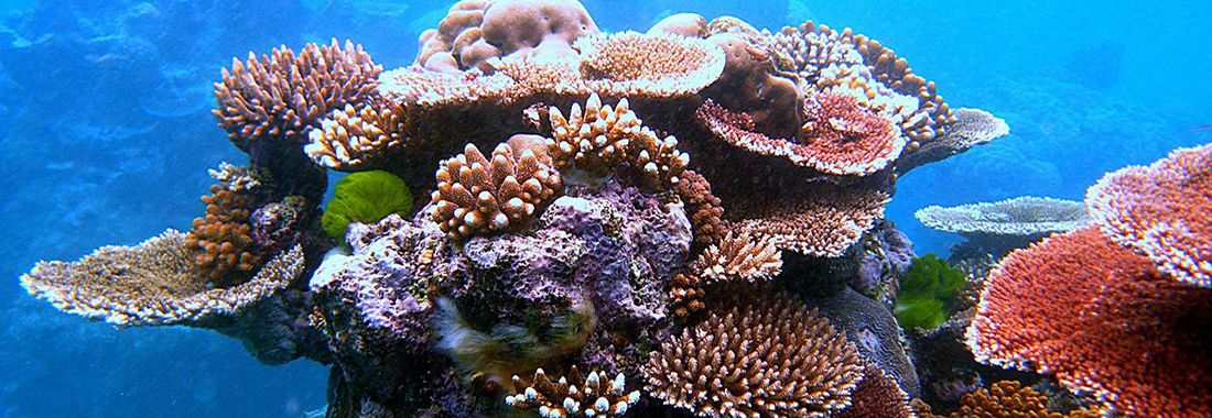 Chasing Coral: an evening of coral reef science