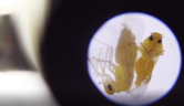 Customising solutions: whiteflies and world hunger