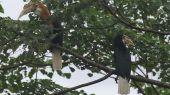 The birdlife of an unforgiving paradise