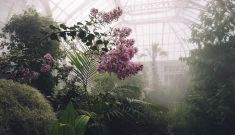 FLORA Symposium: Challenges Facing Sustainability Of Plants In WA Today