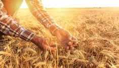 Regenerative Farming Forum By The Shire Of Brookton
