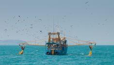 WA fisheries swimming pretty